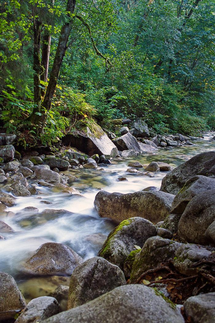 Shannon-Creek.jpg